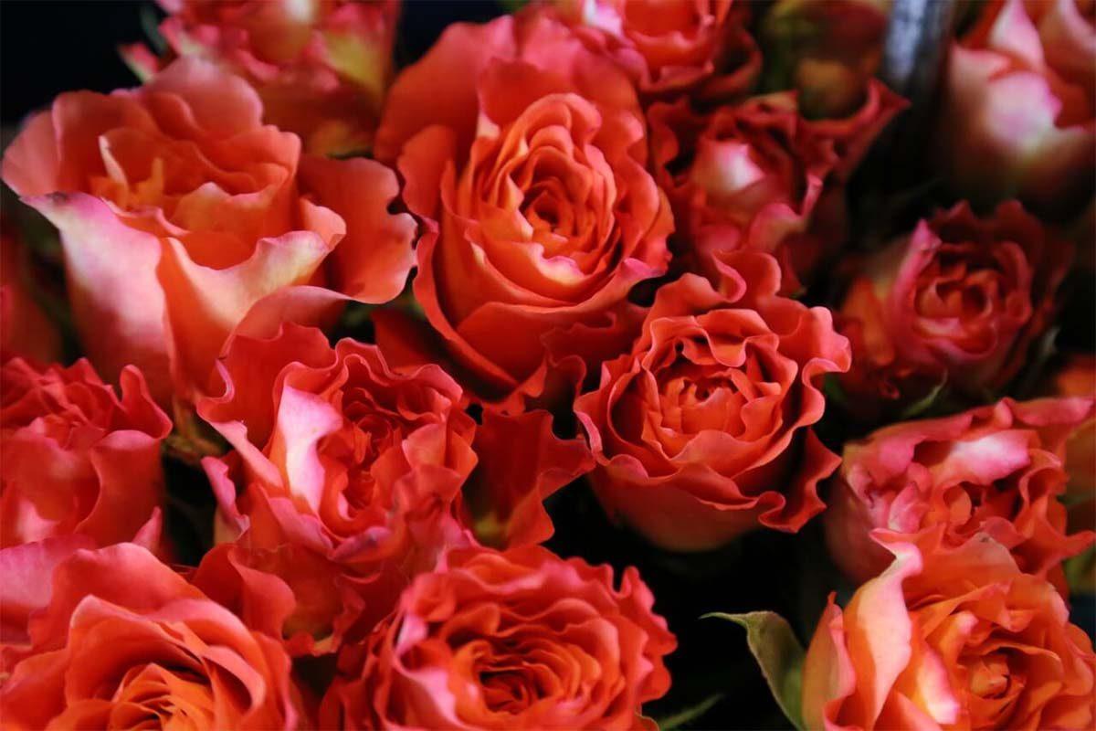 como abrir uma floricultura online